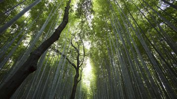 Calidad y Medio ambiente